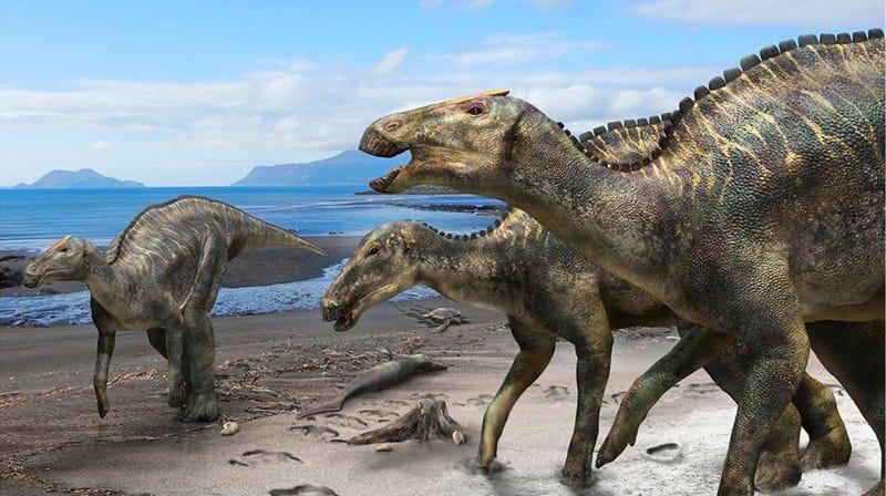 Artist's depiction of Kamuysaurus japonicus.