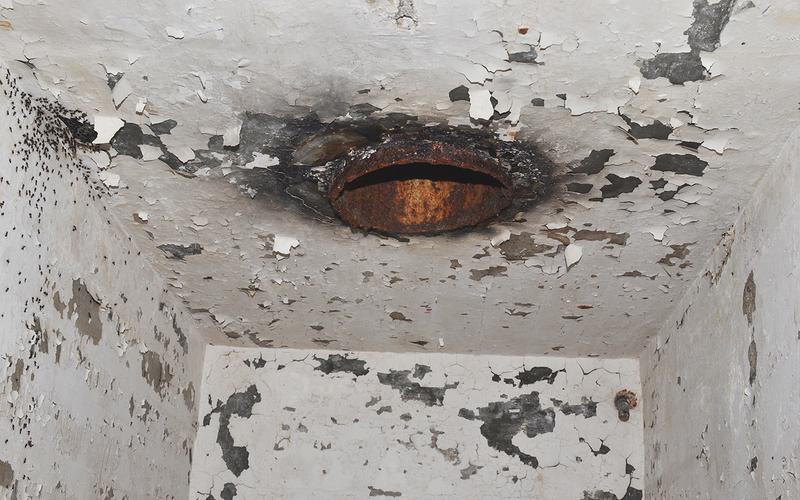 Illustration for article titled Científicos liberan a las hormigas caníbales que llevaban años atrapadas en un búnker nuclear abandonado