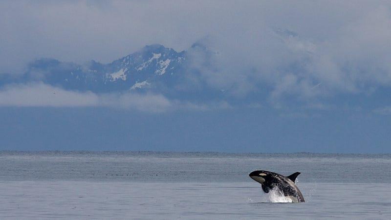 Image: Kenai Fjords National Park /Jim Pfeiffenberger via Flickr
