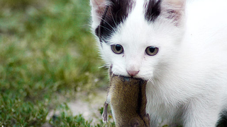 This Is The One Thing That People Never Understand About Cats