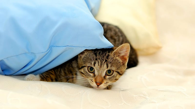 Get Pet Hair Out of Your Bed Fast with a Squeegee