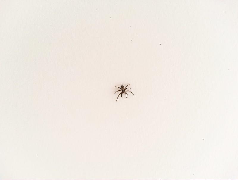 Illustration for article titled Report: Spider