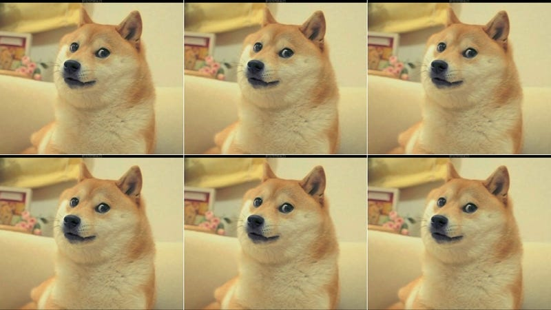 Doge Meme Dog Breed