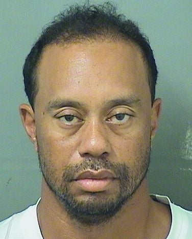 """Illustration for article titled Arrest Records Describe Tiger Woods As """"Confused,"""" Not Under Influence Of Alcohol"""