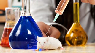 "Illustration for article titled Hemos creado en laboratorio ratones ""superinteligentes"""