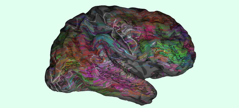 Illustration for article titled New Brain Map Shows Where Words Are Stored Inside Your Head