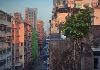 Illustration for article titled Entire Wild Trees Grow On The Walls of These Hong Kong High Rises