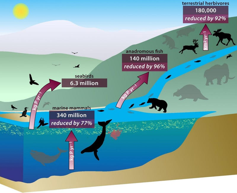 How Whale Poop Balanced Earth's Nutrient Cycles