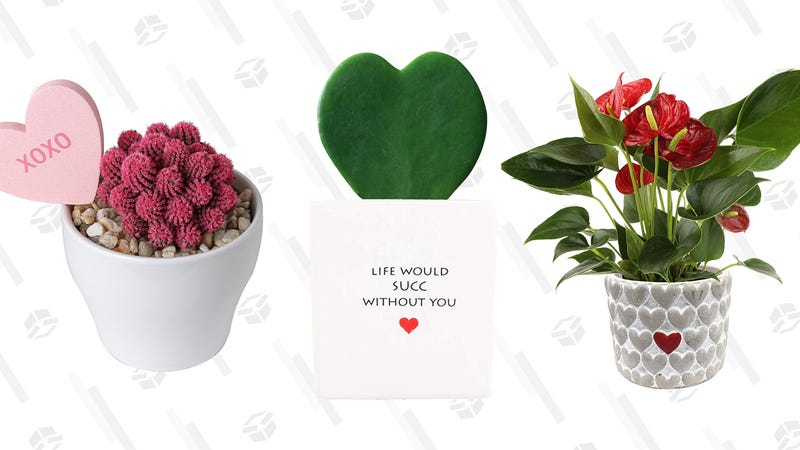 Valentine's Day Plants | $17-$37 | Amazon