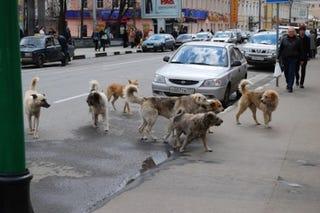 Illustration for article titled Különleges egységekkel üzentek hadat a kóbor kutyáknak Szarajevóban