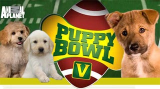 """Illustration for article titled Animal Planet Will See Your """"Football"""" And Raise You Puppies"""