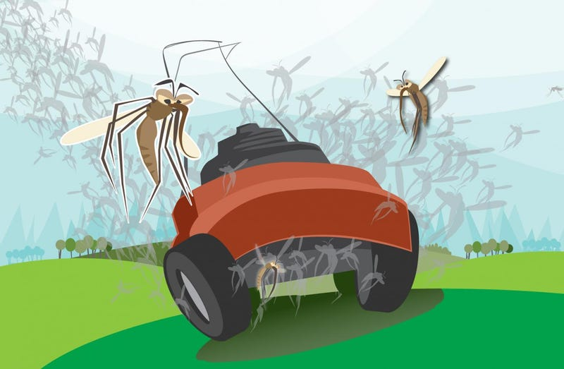 Illustration for article titled People Mow Non-Native Plants, Inadvertently Spread West Nile Virus