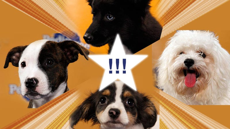 Illustration for article titled DROP EVERYTHING: The Puppy Bowl Starting Lineup Is Here!