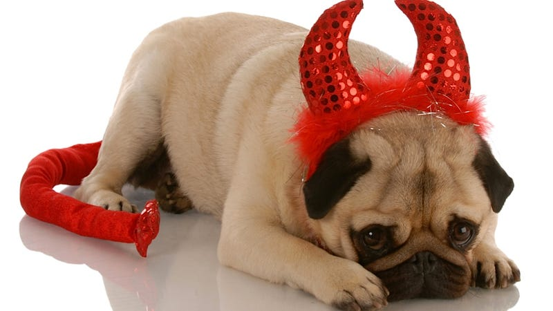 Illustration for article titled Research Suggests That Left-Pawed Dogs Are Just Slightly Evil
