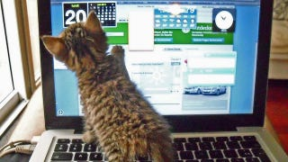 Illustration for article titled The Kitten Wants a Touchscreen in This Week's Open Thread
