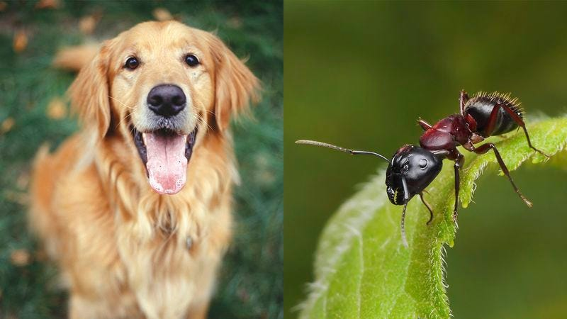 Illustration for article titled Are You A Dog Person Or An Ant Person?