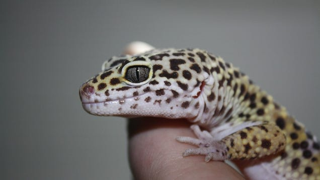 You Don't Wanna Know How a Climate Change-Induced Mass Extinction Can End (Hint: Lizards)
