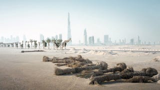 Illustration for article titled Photos of animals wandering a post-human Dubai