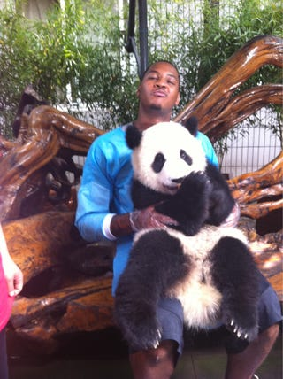 Illustration for article titled Carmelo Anthony Is The Panda Whisperer