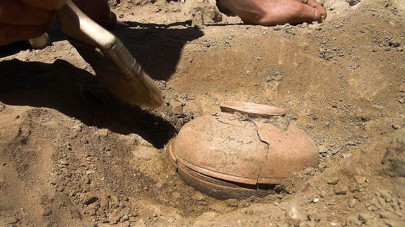 Illustration for article titled Logran resucitar y cultivar una calabaza india que se extinguió hace 850 años