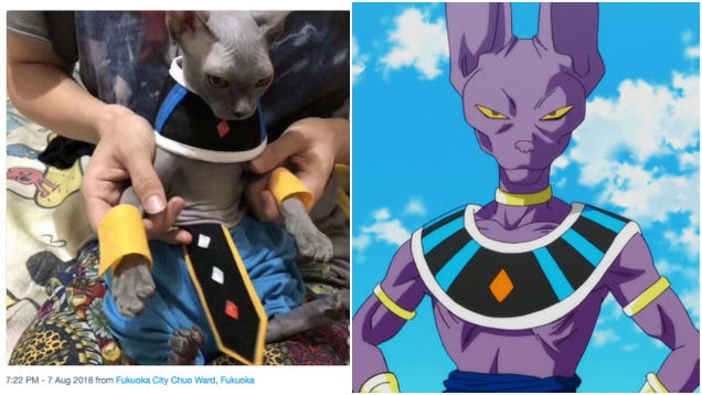 This Cat Does An Excellent Cosplay Of Beerus From Dragon Ball – www ...