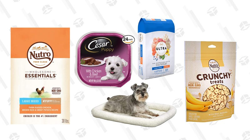 Puppy Essentials Gold Box | Amazon