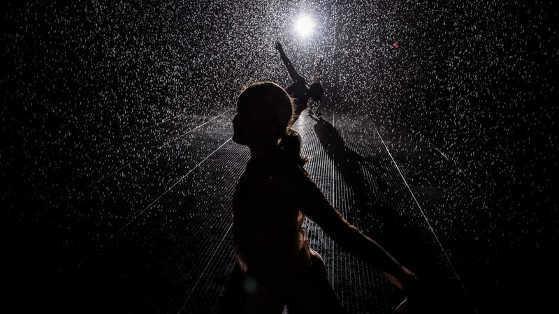 Illustration for article titled Inside the Rain Room: Walking Through a Downpour Without Getting Wet