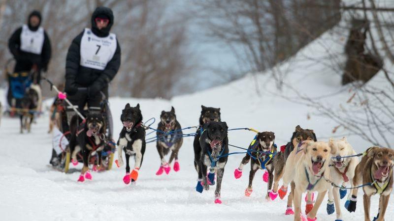 Author Blair Braverman dogsledding (Photo: Aladino Mandoli)