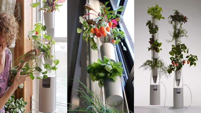 Illustration for article titled This Gorgeous Mini Hydroponic Farm Turns Your Home into Pot and Produce Heaven