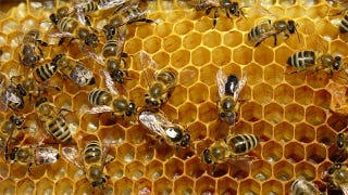 Illustration for article titled Cellphones Cause Bees to Swarm to Their Death, Says a New Study