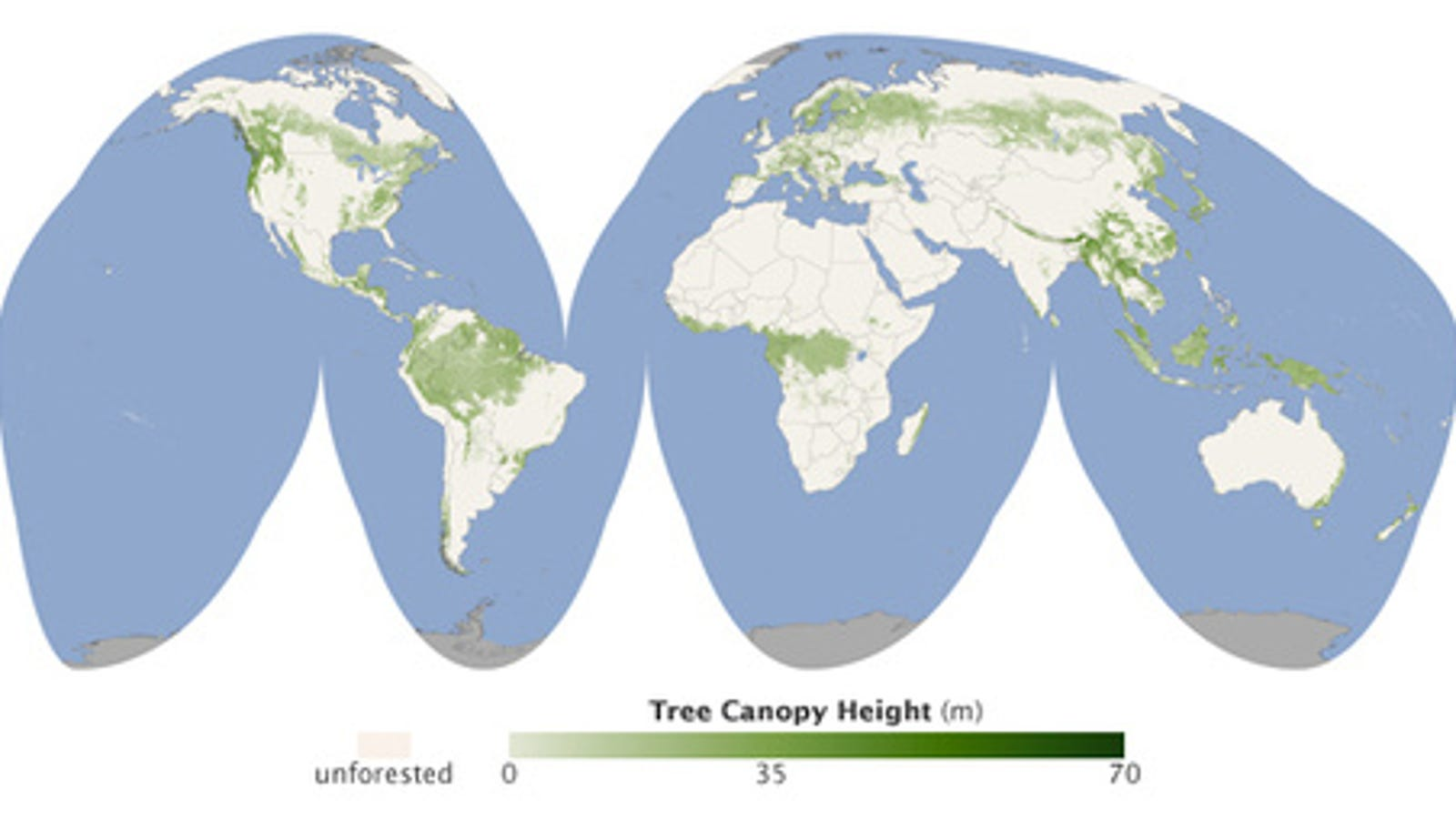 The height of the world's forests in map form