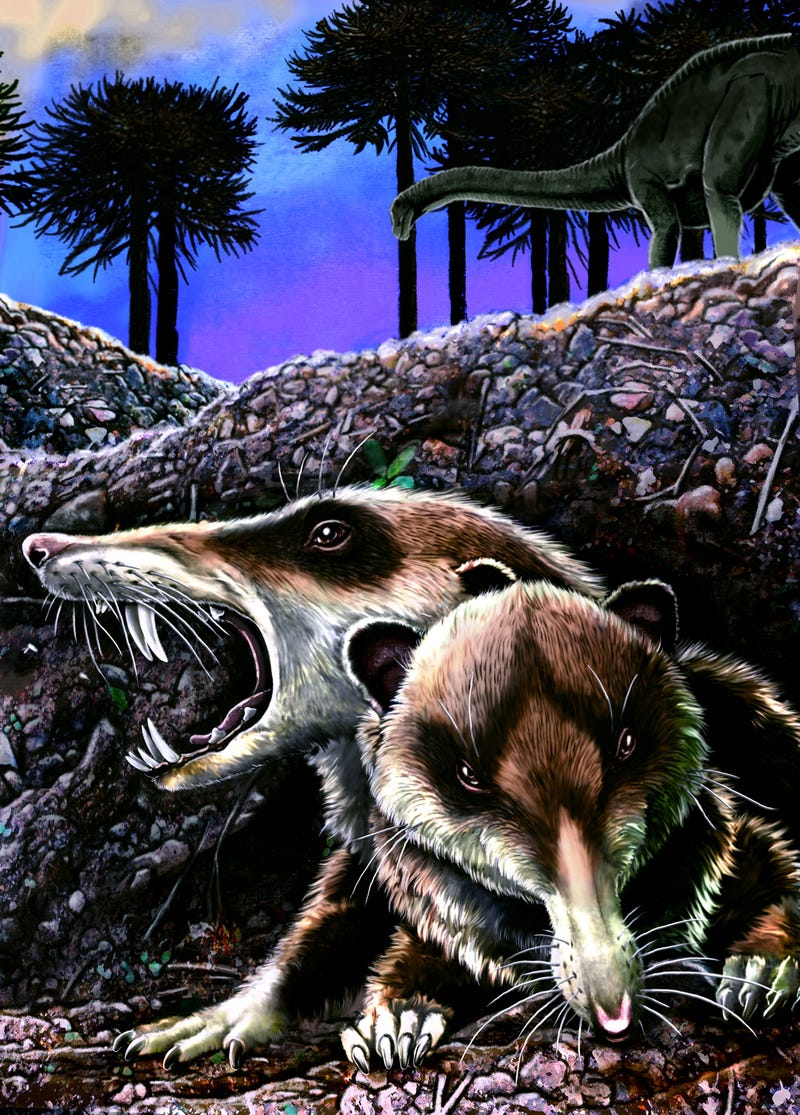 Illustration for article titled Sabre-tooth squirrels stalked ancient South America