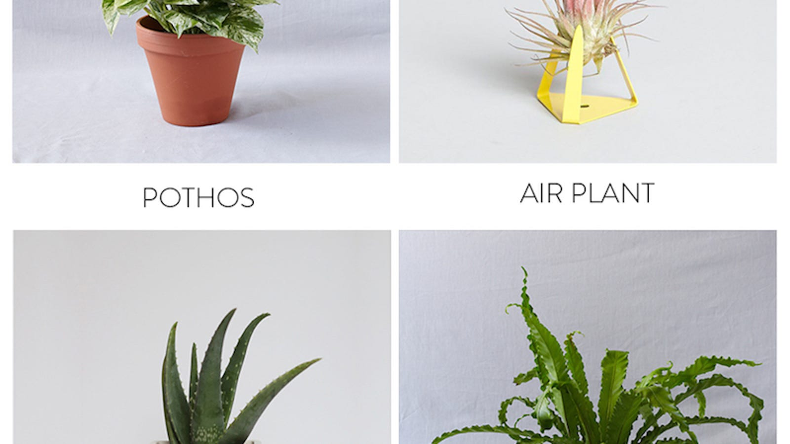 The Best Plants To Bring Life To Your Bathroom