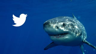 Illustration for article titled Australian Sharks Will Now Be Tweeting Their Locations