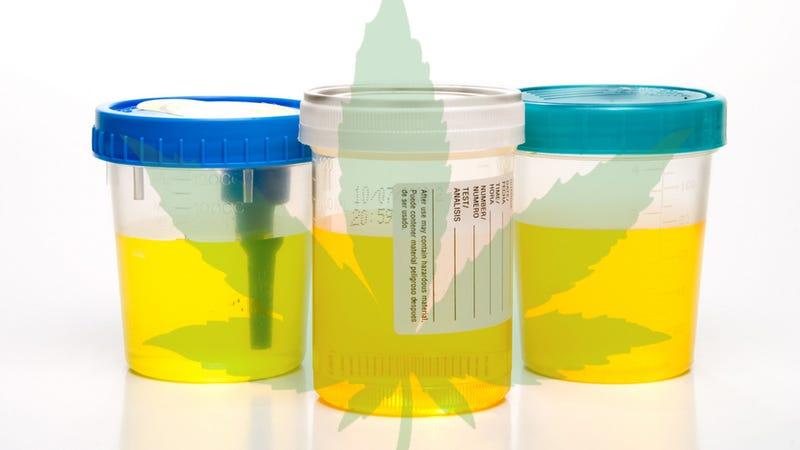 how to become a marijuana tester