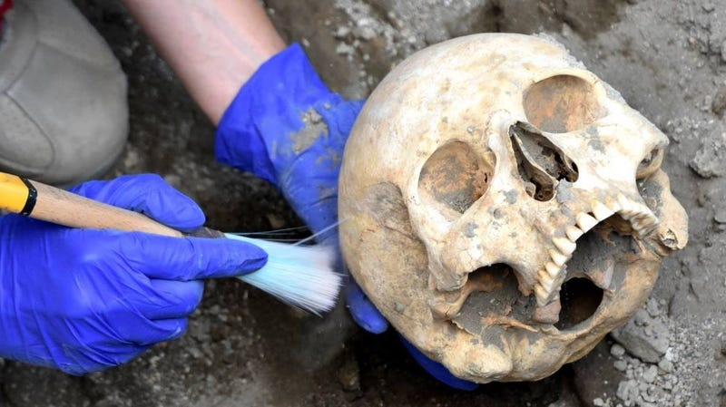 The skull of the Pompeii victim.