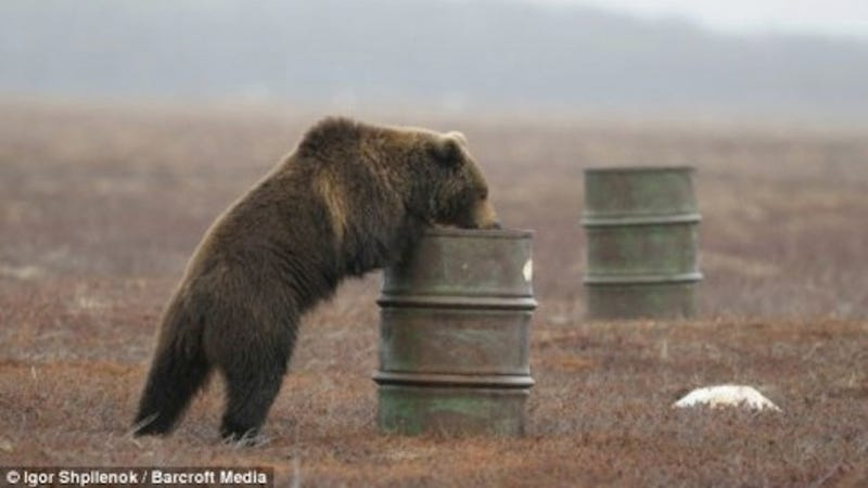 Illustration for article titled Russian Bears Are Hooked on Huffing Jet Fuel Until They Pass Out
