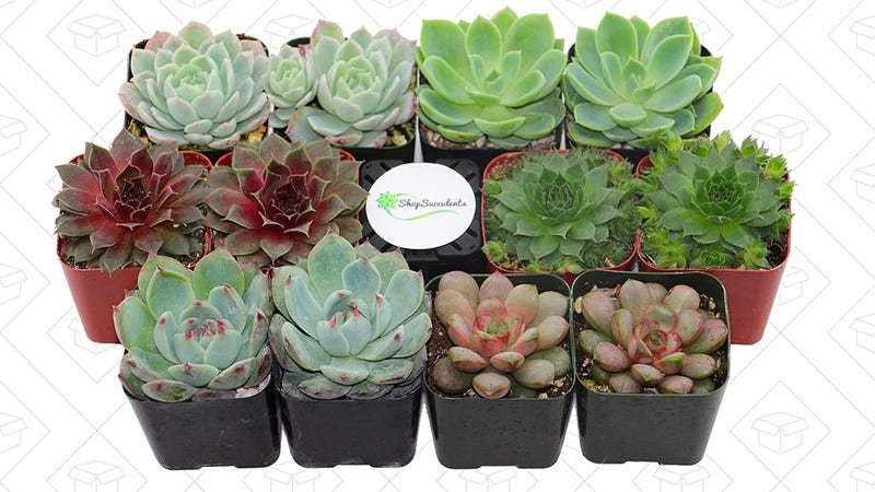 Shop Succulents Rosette Succulent | $27 | Amazon