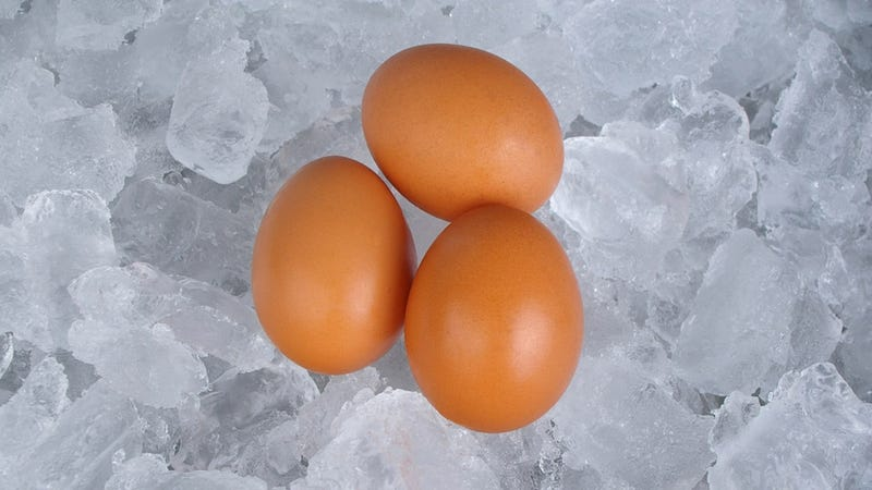 Illustration for article titled Are Your Eggs Dying? Yes, Yes They Are. Thank God for Eggsurance.