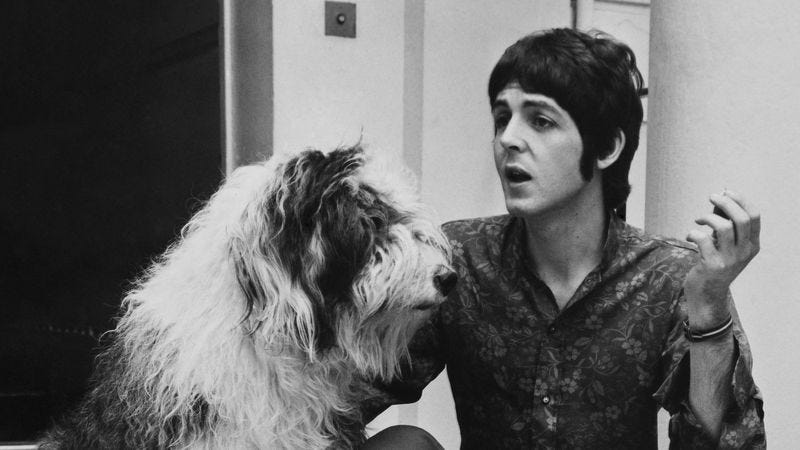 Paul McCartney And Martha Around 1968 Photo Getty Images