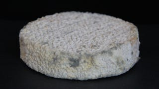 Ew, this human cheese was made with belly button and toe bacteria