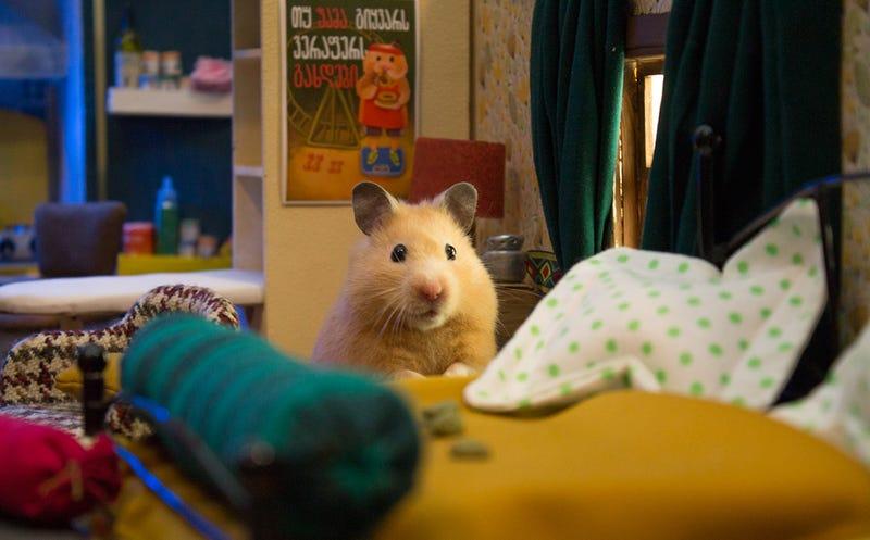 Illustration for article titled El plató más complejo que verás hoy es una ciudad en miniatura creada para una serie protagonizada por hamsters