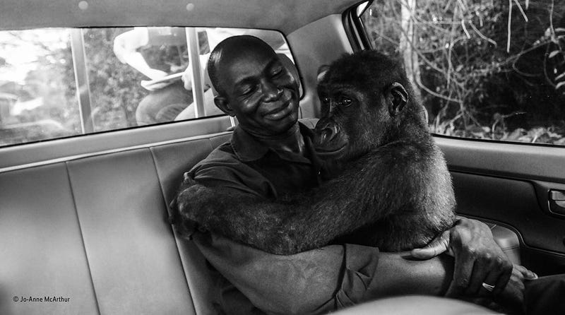 Image: Wildlife Photographer of the Year / Jo-Anne McArthur