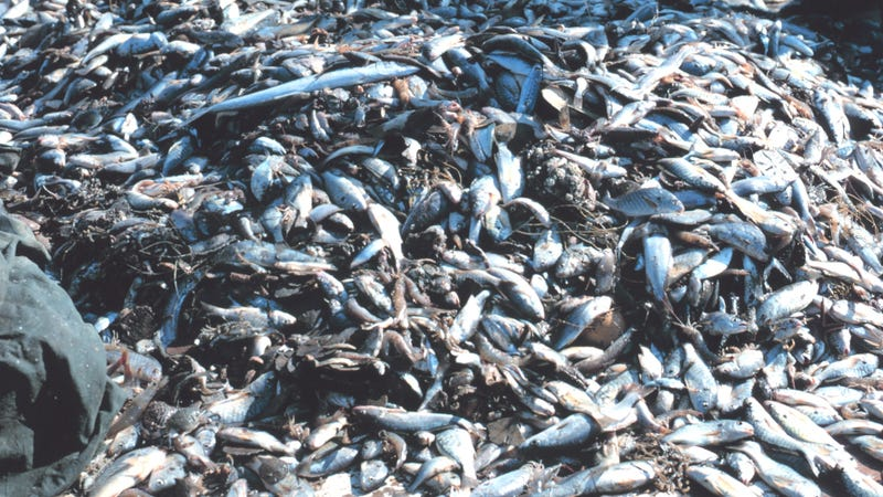 A Staggering Amount of Fish Is Wasted Each Year (updated)