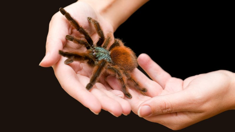 How To Get Over Your Fear Of Spiders And Start Caressing -6352
