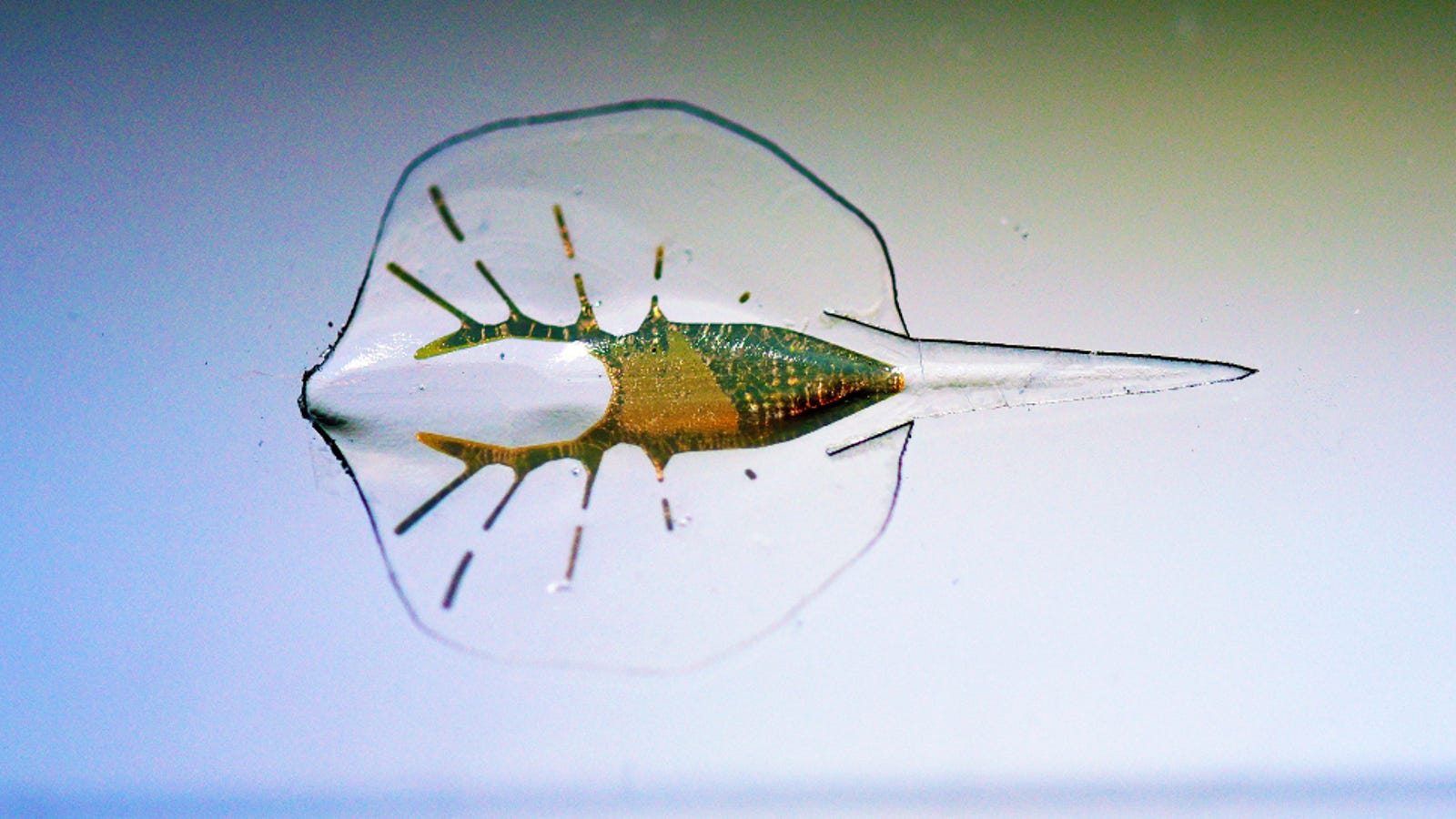 This Cyborg Stingray Is the Coolest Thing You'll See All Day