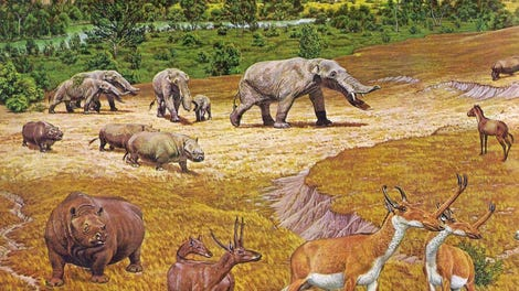 Newly Discovered Ancient Carnivore Was Bigger Than a Polar