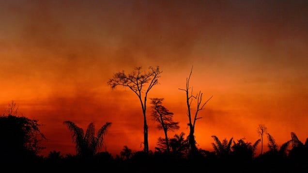 Deforestation in the Brazilian Amazon is Soaring