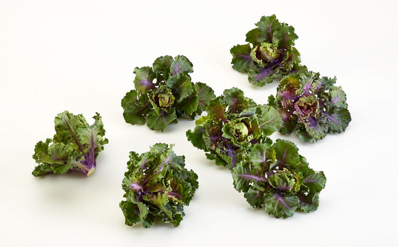 Illustration for article titled Coming Soon: BrusselKale, the Food of the Future