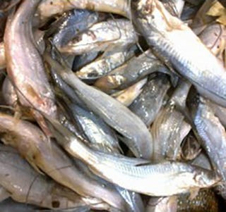 Illustration for article titled To Have a Delight on Your Dining Table, Buy Fresh Sea Water Fish Online in Delhi